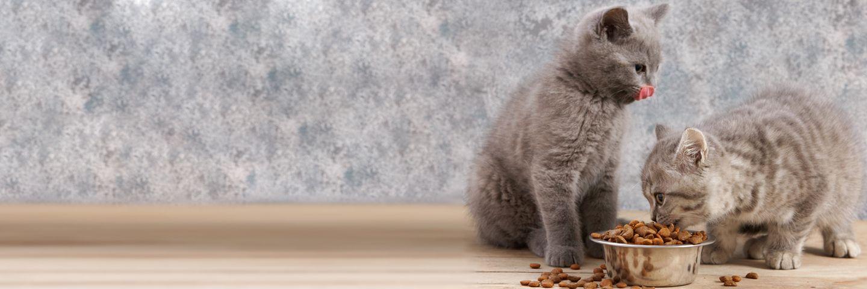 Как выбрать корм для кошки? Советы Роскачества